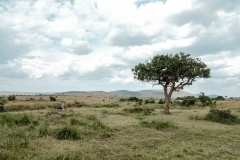 Imágenes Masai Mara