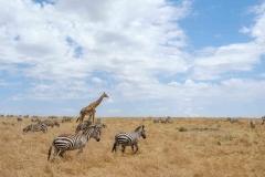Fauna Masai Mara